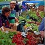 Falmouth Farmers' Market