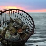 Wellfleet Shellfishermen's Farmers Market